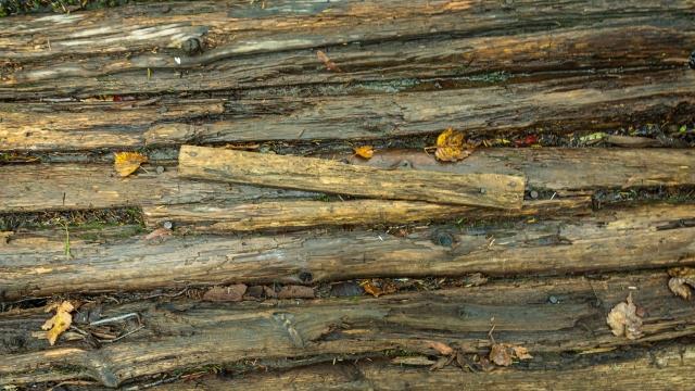 木材 腐る
